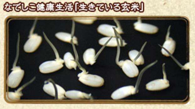 生きている玄米
